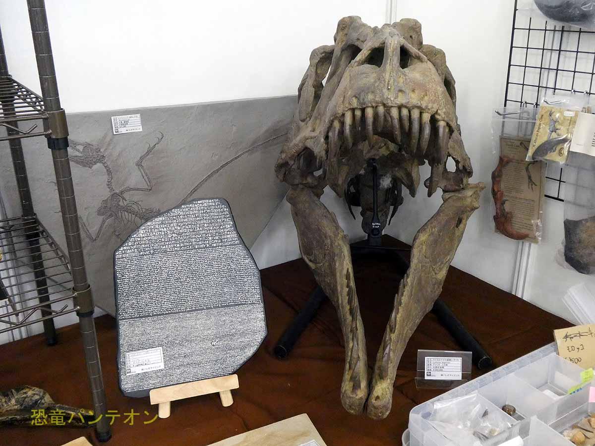 ライスロナクス頭骨レプリカとロゼッタストーン縮小レプリカ