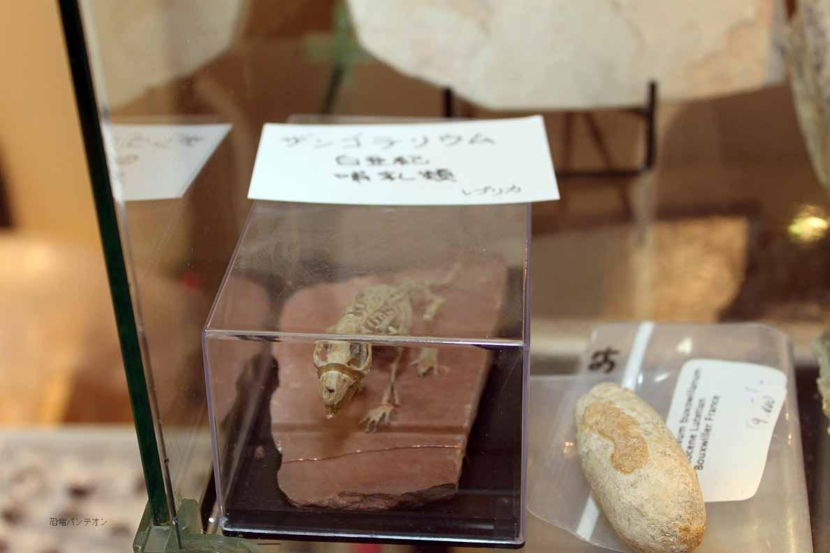 Zoic Srl 白亜紀の哺乳類 ザンゴテリウムのレプリカ