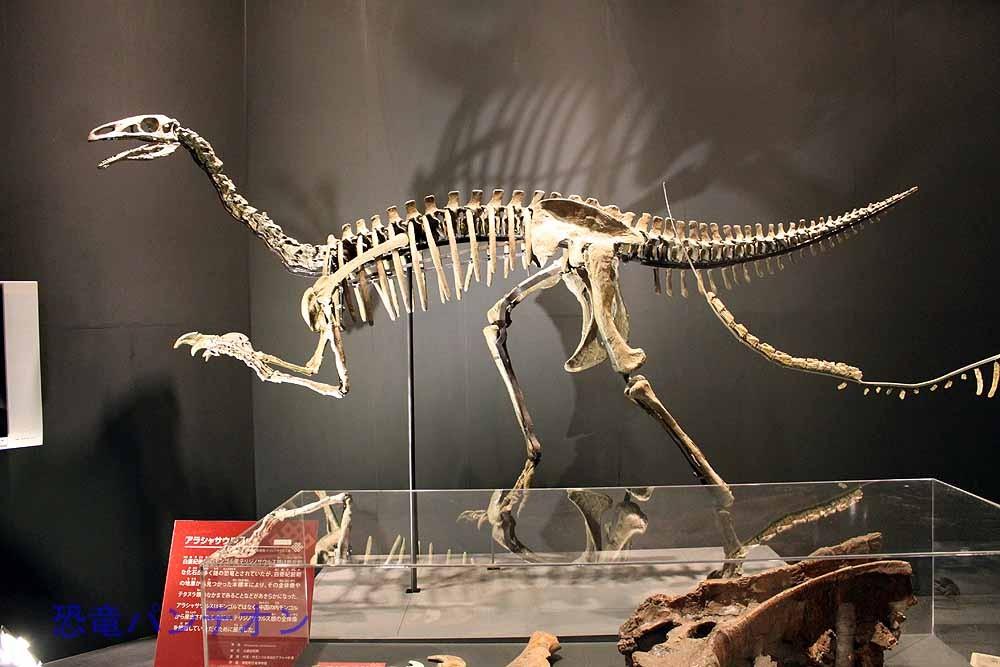 アラシャサウルス(レプリカ) アラクササウルスと表記される場合もあります。