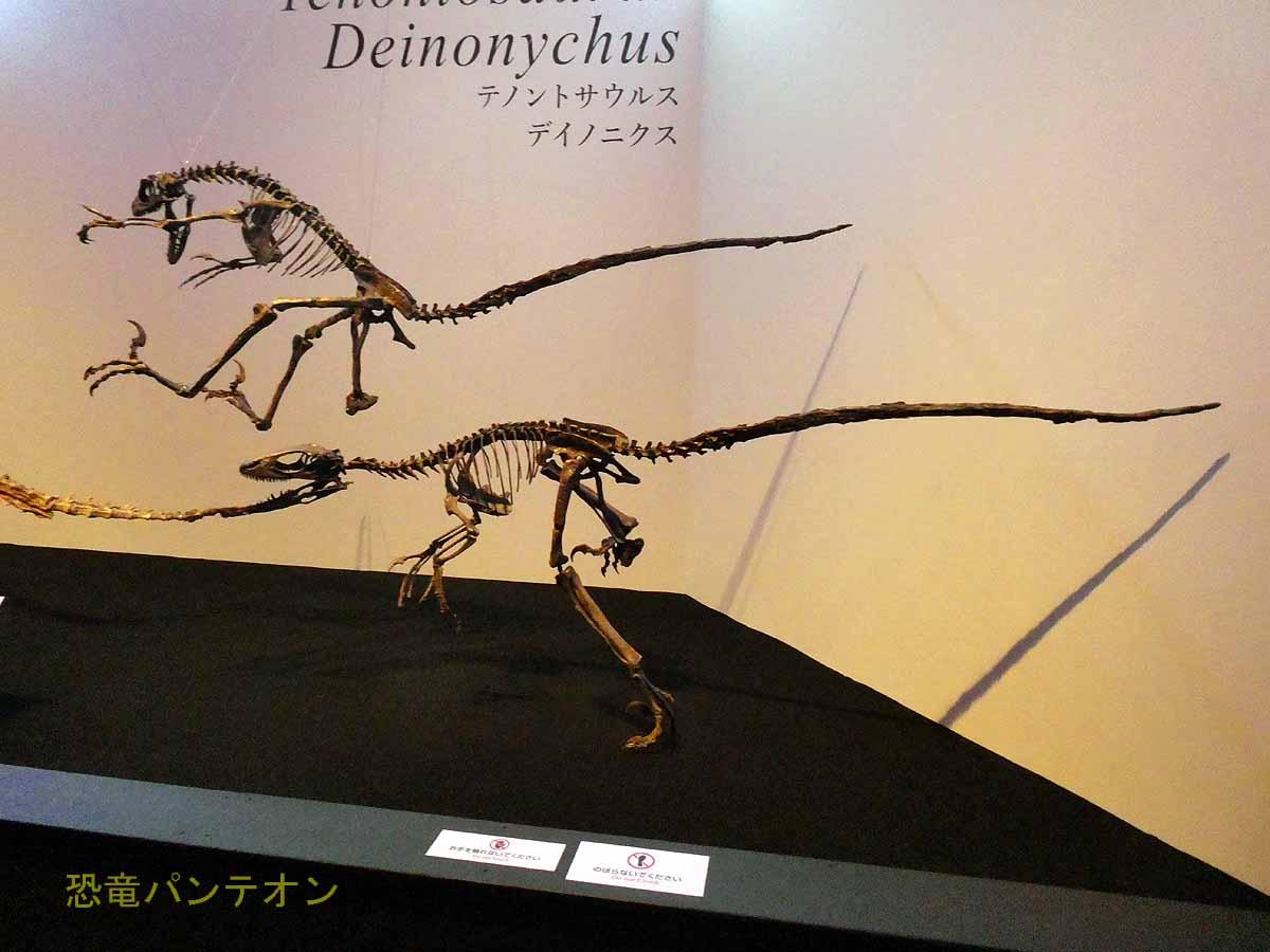テノントサウルスを襲うデイノニクス