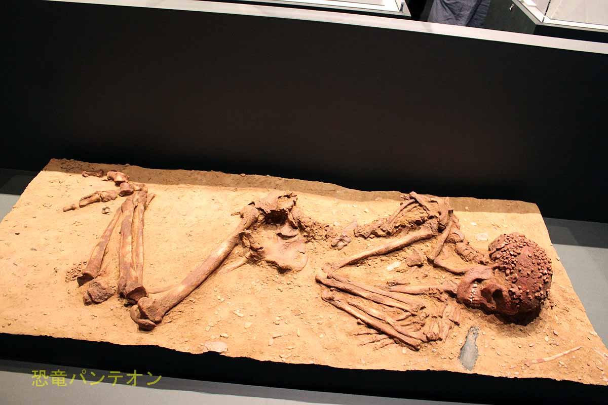 クロマニョン人埋葬人骨 レプリカ グリマルディ洞窟遺跡(イタリア) 3万4000年~2万5000年前(グラヴェット文化) 個人所蔵