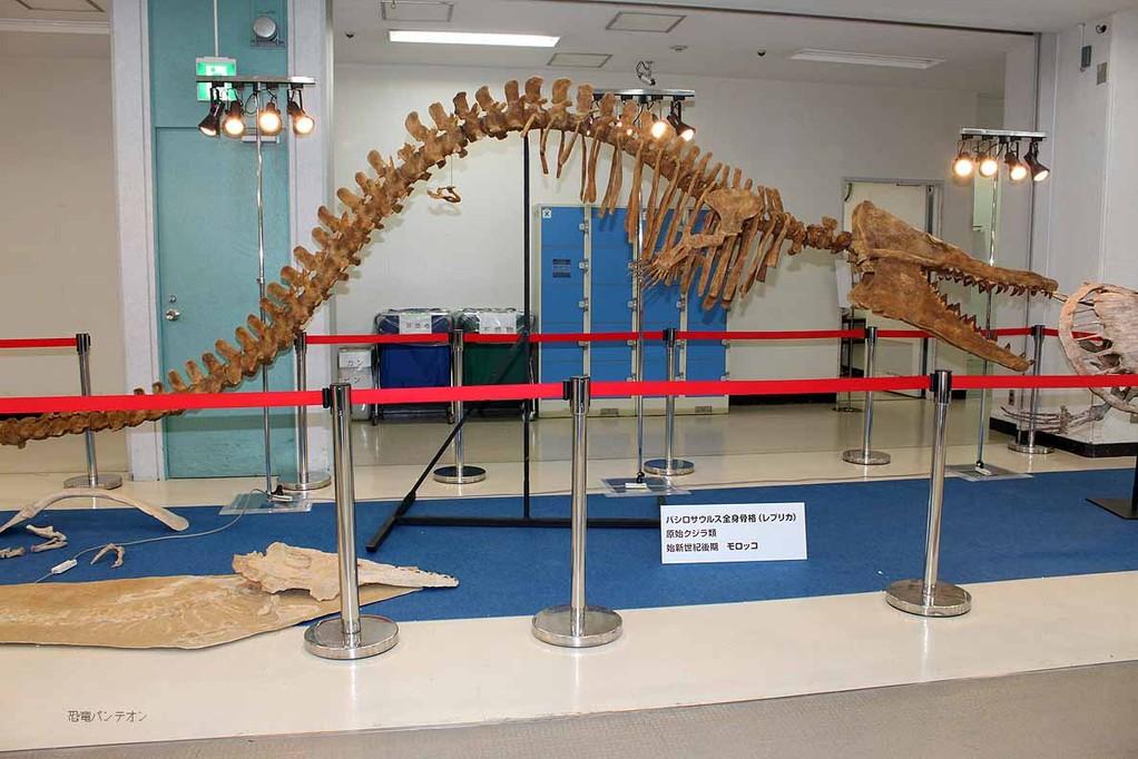 展示の目玉、バシロサウルス全身骨格レプリカ 始新世後期 モロッコ