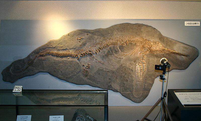 魚竜化石 イクチオサウルス