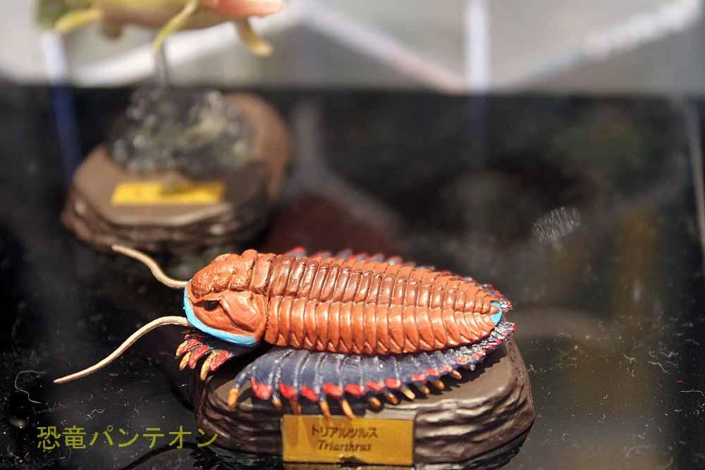 海洋堂 古生代 三葉虫の種類は何でしょう?