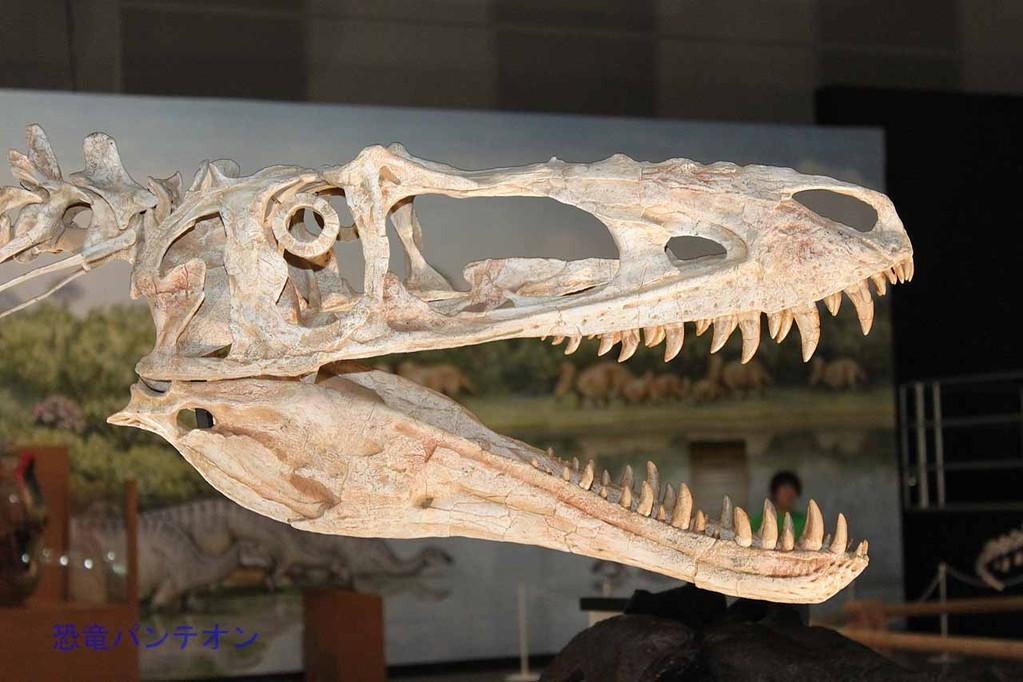 アリオラムス頭骨