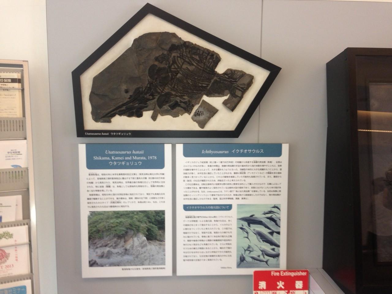 会場理学部の入口壁面にはウタツサウルスのレプリカがありました。