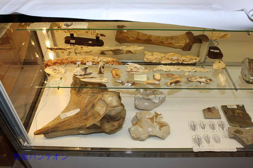 George Heslep-Fossils