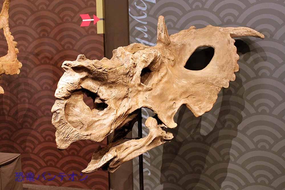 パキリノサウルス Pachyrhinosaurus