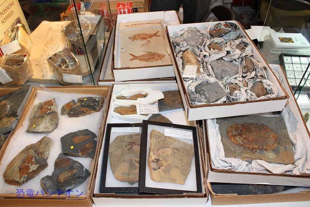 Mijo-Fossils 三葉虫などもあります