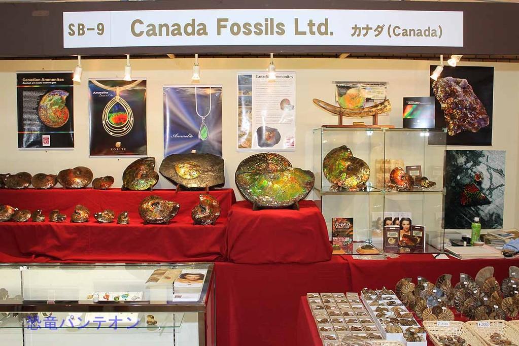 Canada Fossils Ltd. カナダのお店。アンモライト