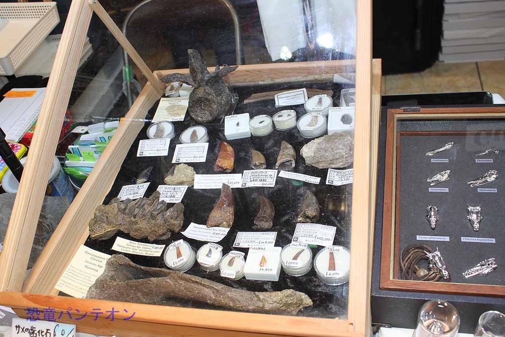 パレオサイエンス トリケラトプスの歯、カマラサウルスの血道弓ほか貴重なかせきもずらり