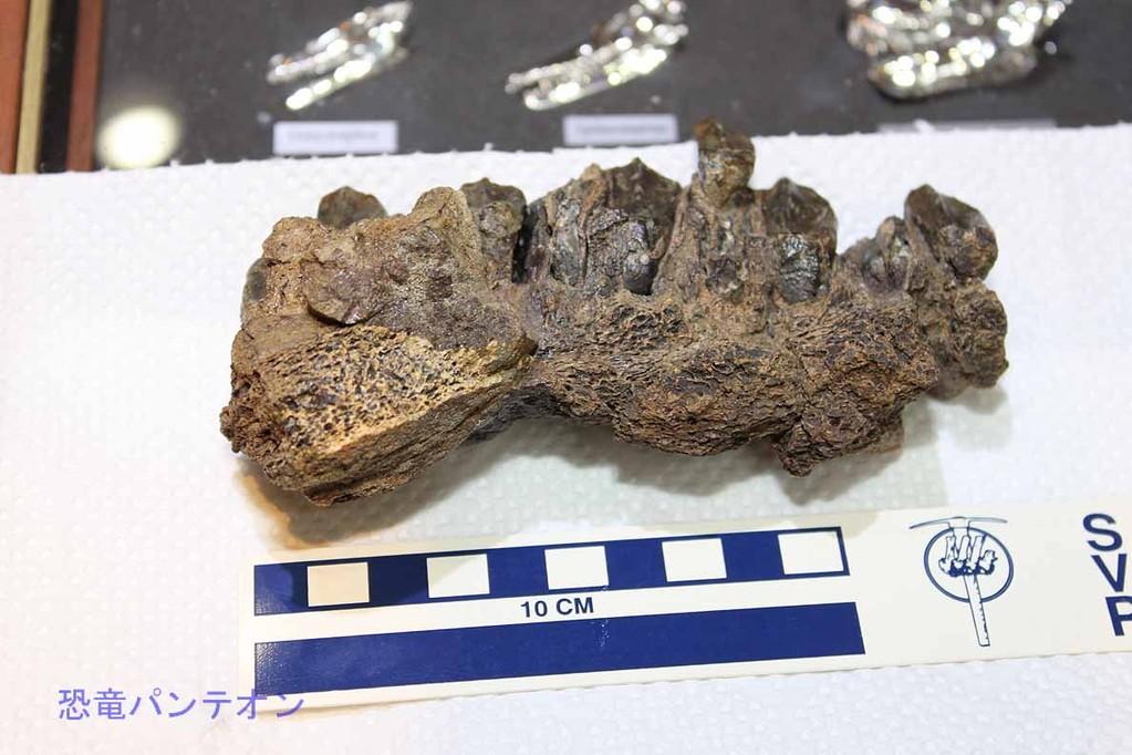 パレオサイエンス トリケラトプスの顎