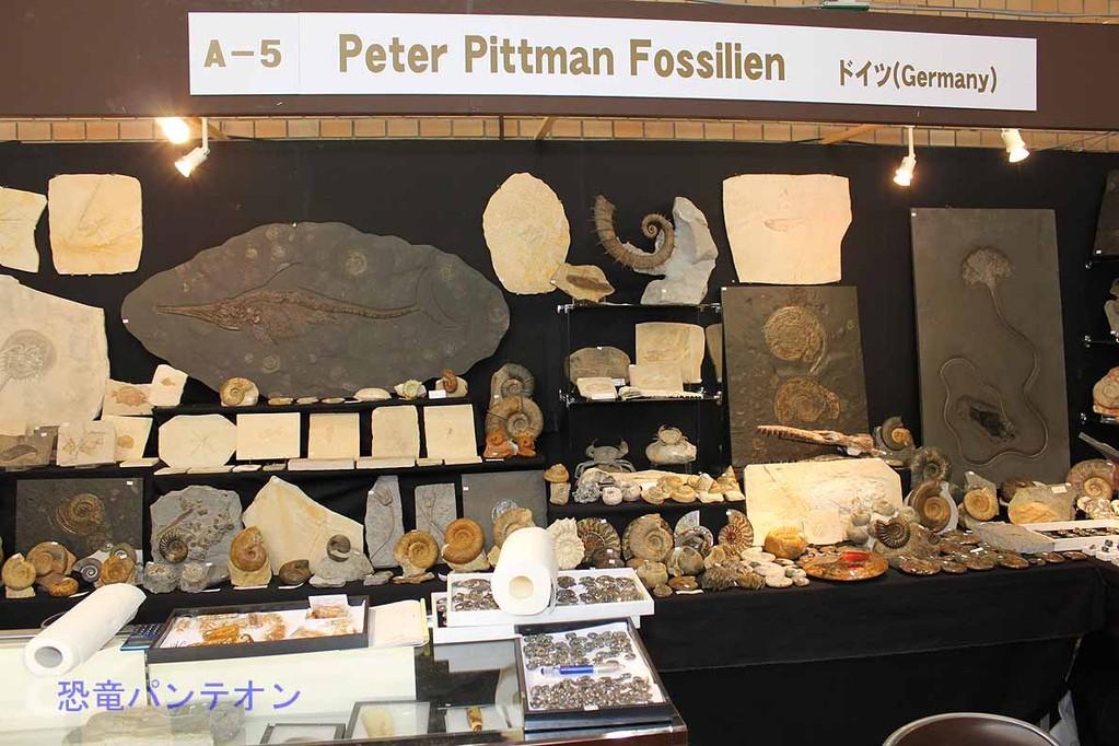 Peter Pittmann Fossilien アンモナイトが主です