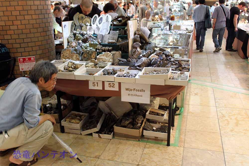 Mijo-Fossils ポーランドの店