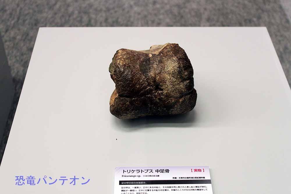 トリケラトプス中足骨