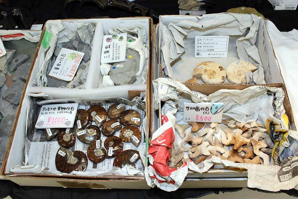 こちらもアンモナイトやサメの歯化石
