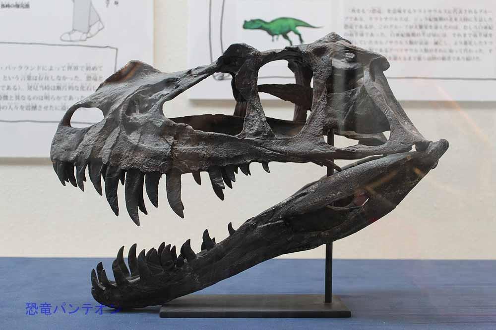 ケラトサウルス頭骨