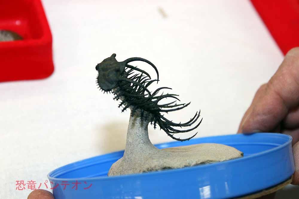 Sahara sea Collection-doc Fossil ここのオーナー、機嫌よく、ショーケースから出してくれました。