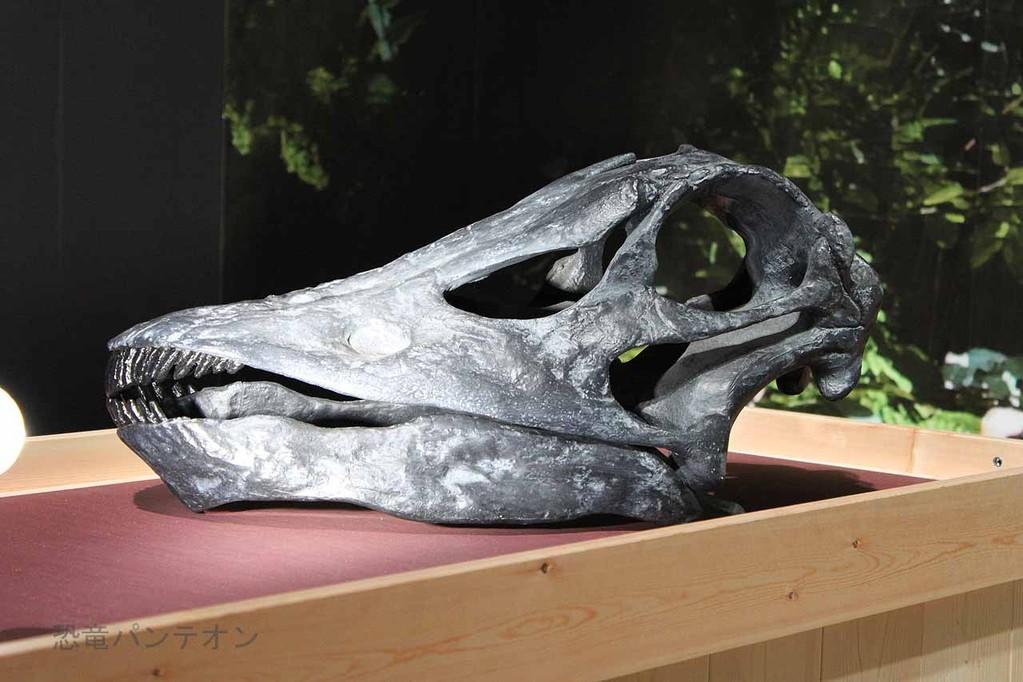 ディプロドクス頭骨