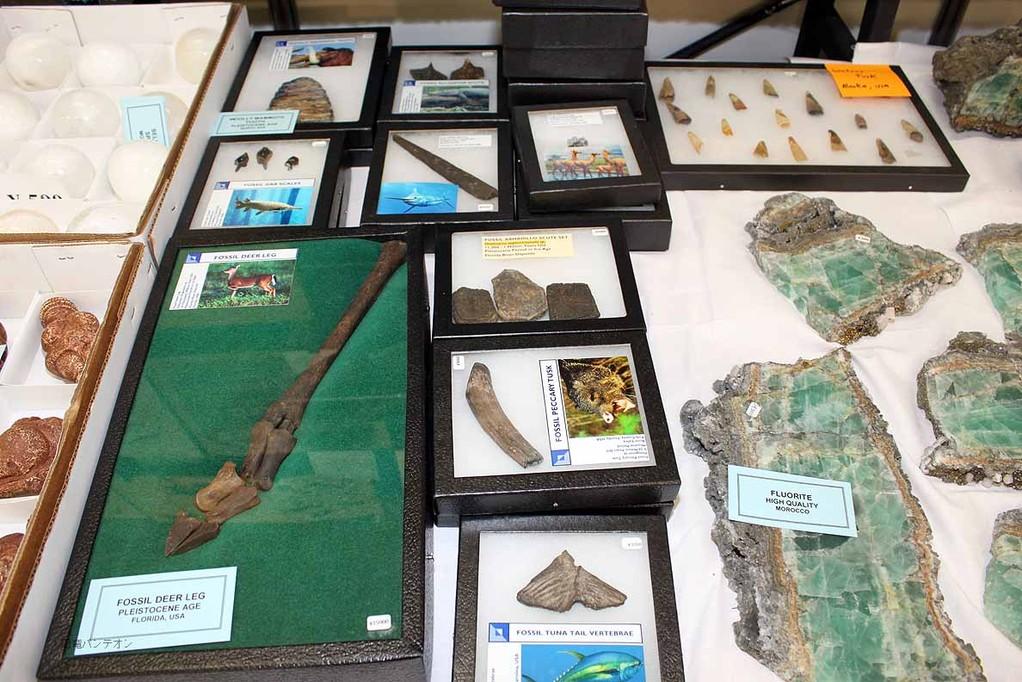 生体復元図つきの化石もあります。