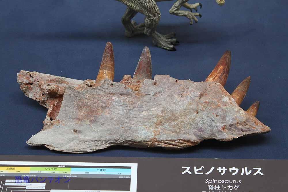 3番目は、巨大化する肉食恐竜。ティラノより巨大だったスピノサウルスなどの登場です。