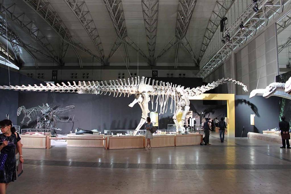 ディプロドクス全身骨格。全長27m!