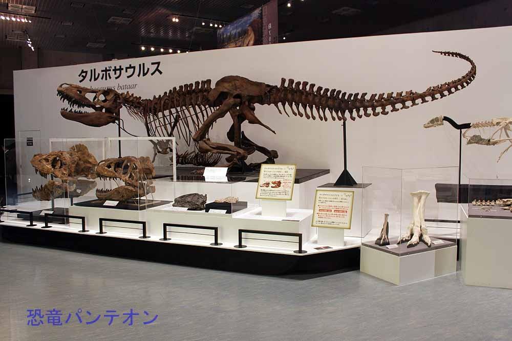 タルボサウルス全身骨格(レプリカ) この姿勢、見覚えありませんか?