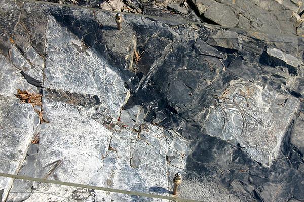 化石のアップ