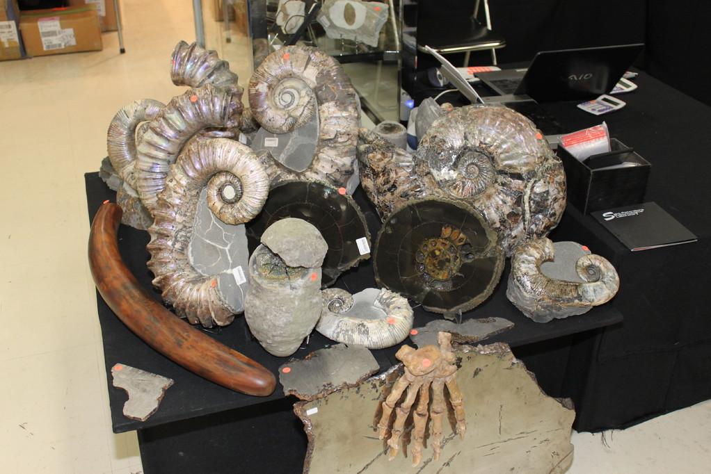 St.Petersburg Paleontological Laboratory アンモナイトもあります。