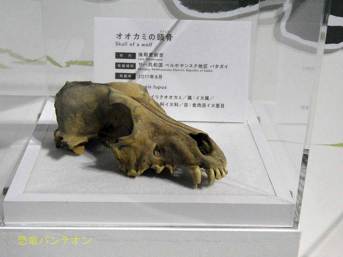 いろいろな頭骨