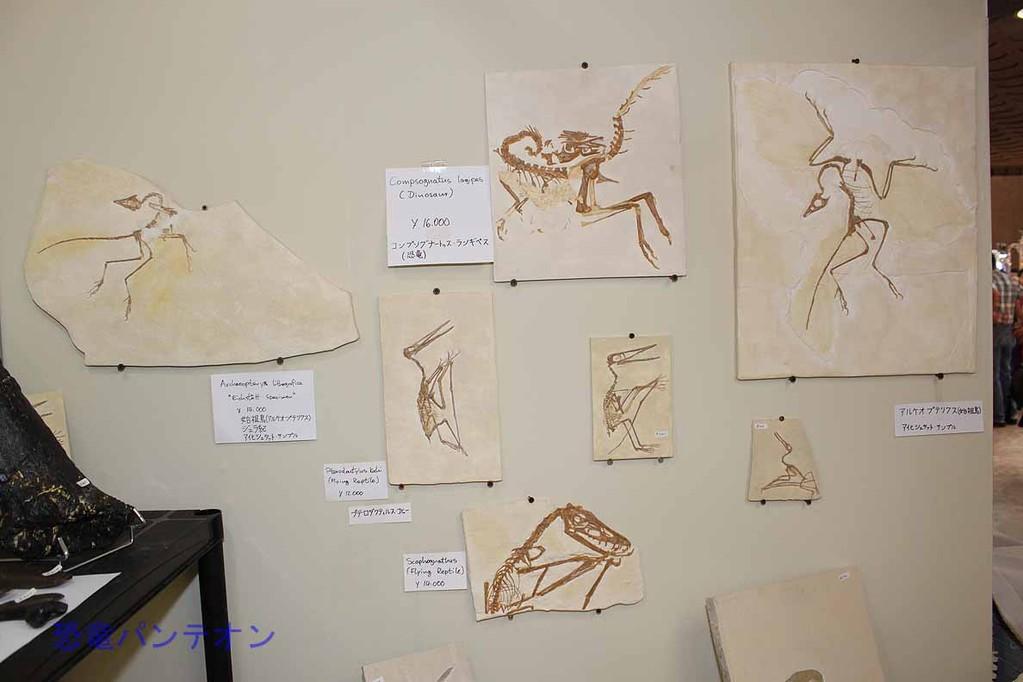 Krautworst Fossils 翼竜やコンピーのレプリカ