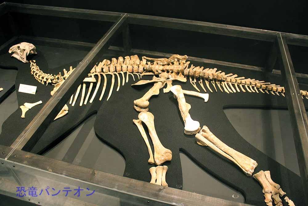 ハドロサウロイド類全身骨格(実物化石)