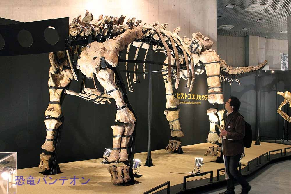 オピストコエリカウディア(実物化石)