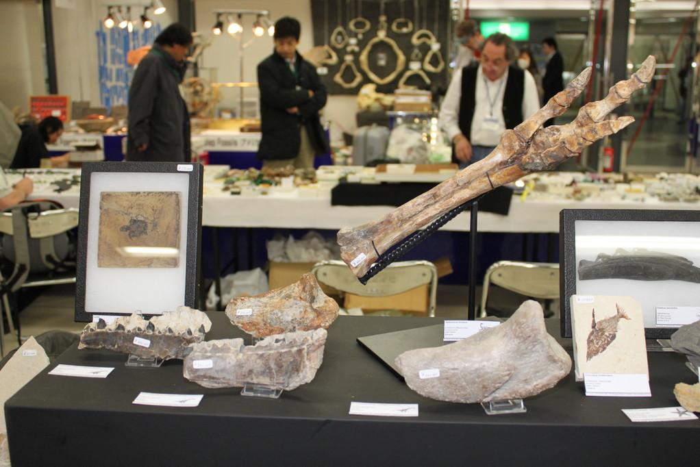 Roland Juvyns ガリミムス 関節している指の化石 (内モンゴル)