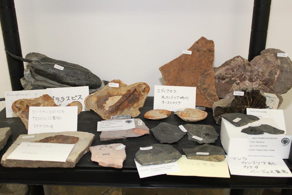 Krautworst Naturstein 先カンブリア紀からカンブリア紀の化石など。