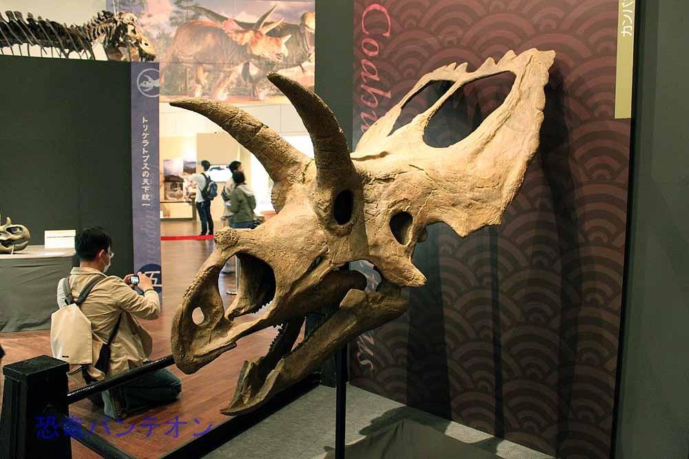 コアウイラケラトプス Coahuiaceratops メキシコから見つかったカスモサウルス亜科。