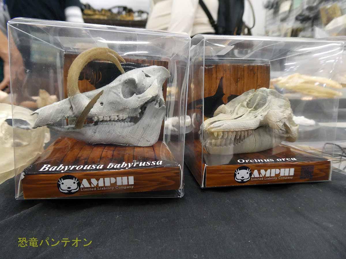 アンフィさんの製品、頭骨縮小3Dレプリカ。3Dプリンターで製作