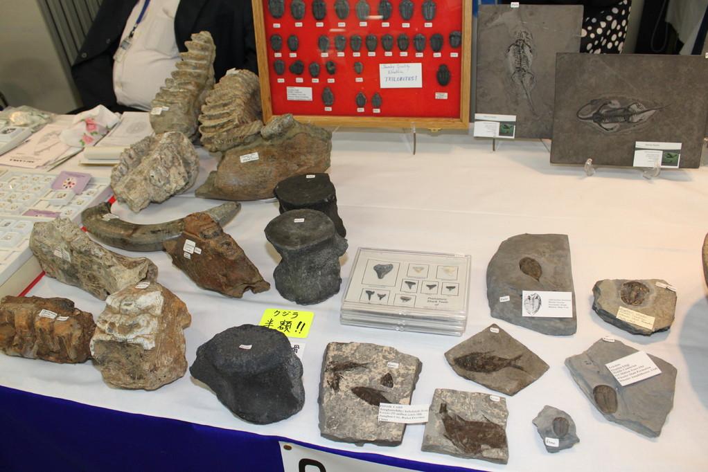 George Heslep Fossils 今回、写真ダメ展示があったため、少しだけです。