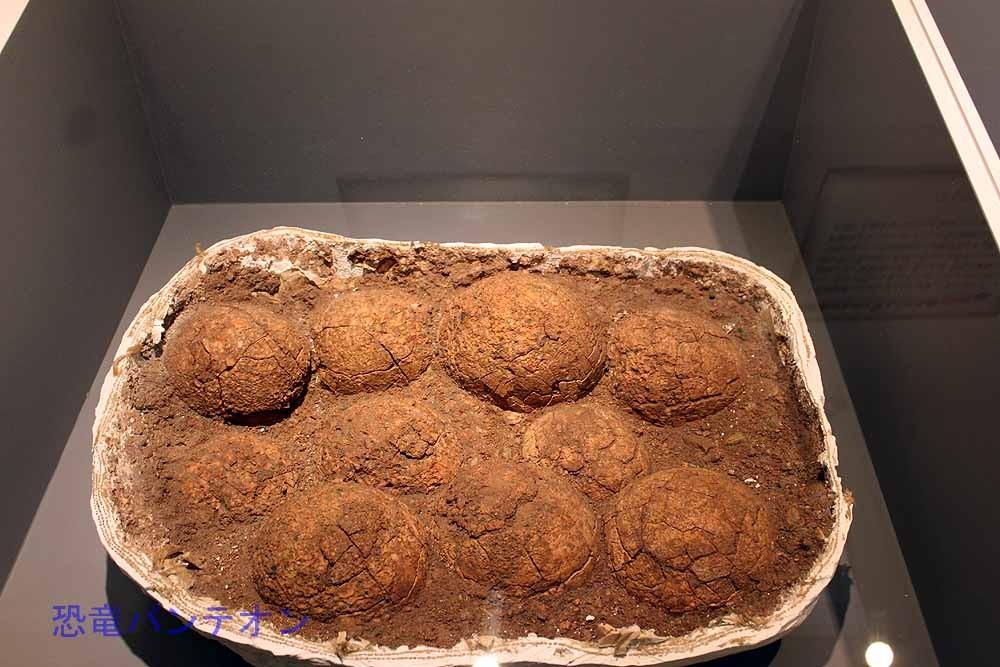 竜脚類のものと考えられる巣(実物化石)