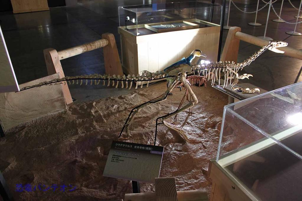 ウラテサウルス骨格