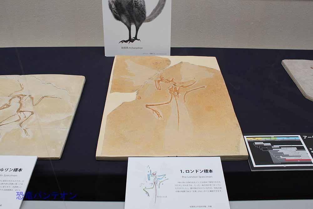 10.鳥類の登場 始祖鳥ロンドン標本