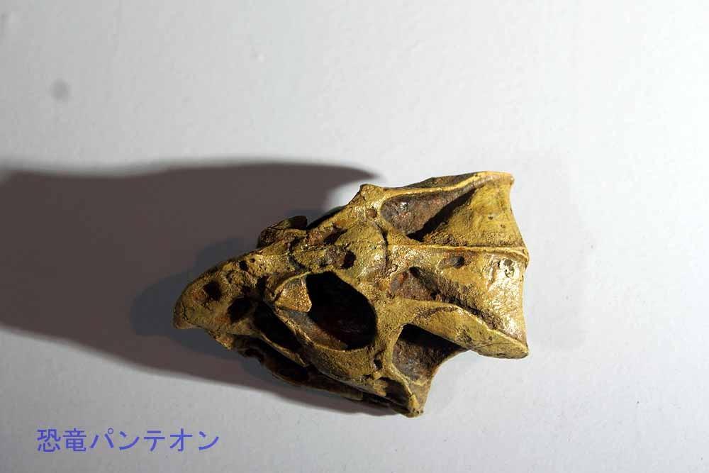 バガケラトプス頭骨