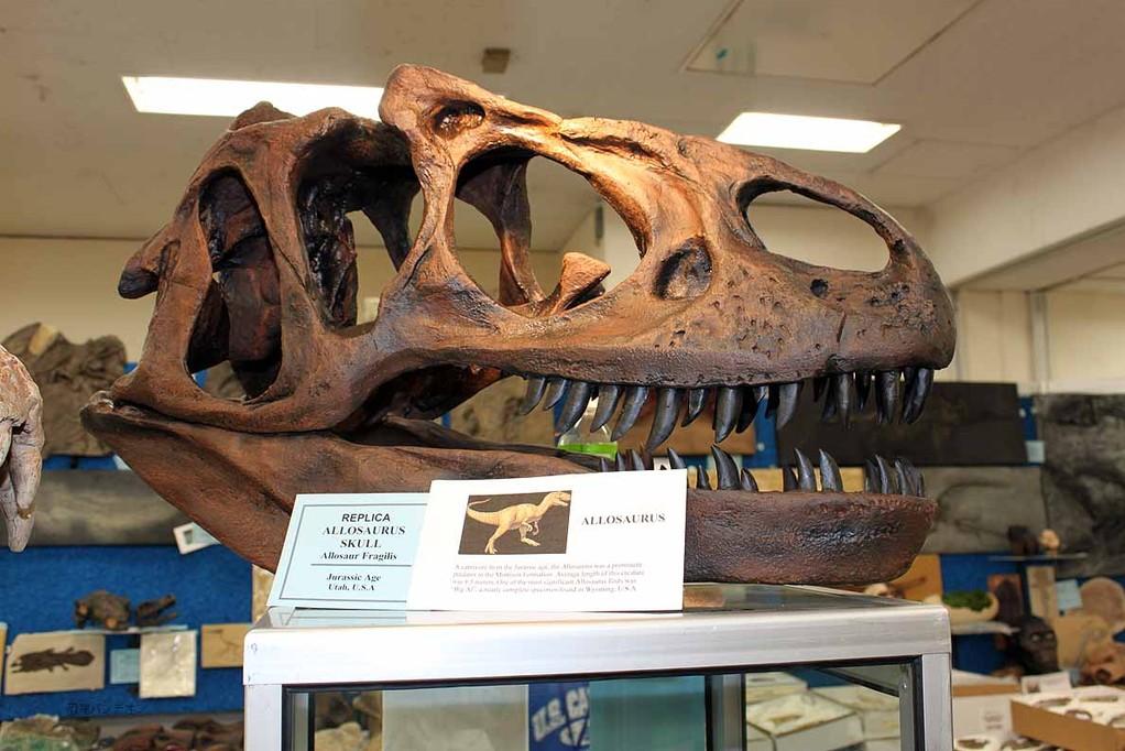 アロサウルス頭骨レプリカ