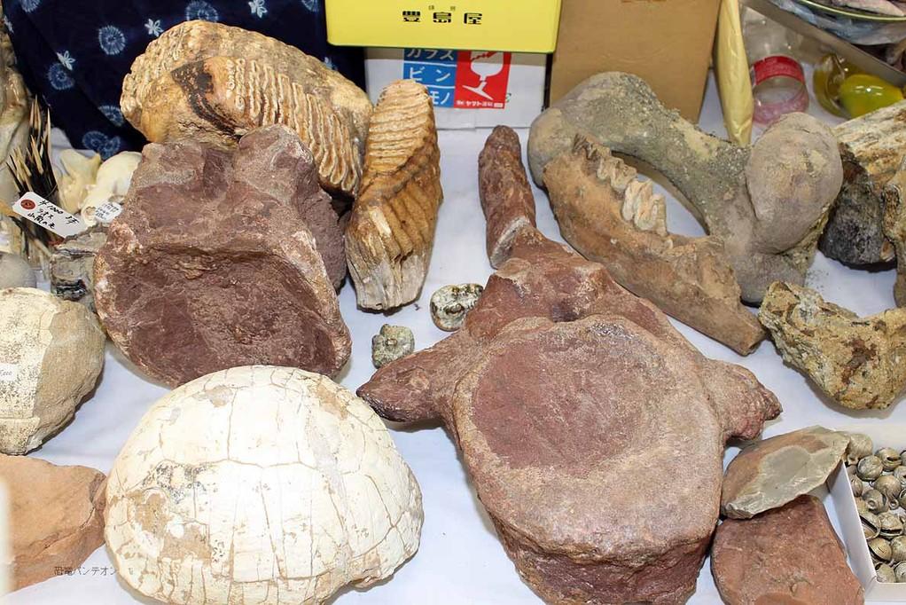 MATERIAL CULTURE テーブル上の化石たち