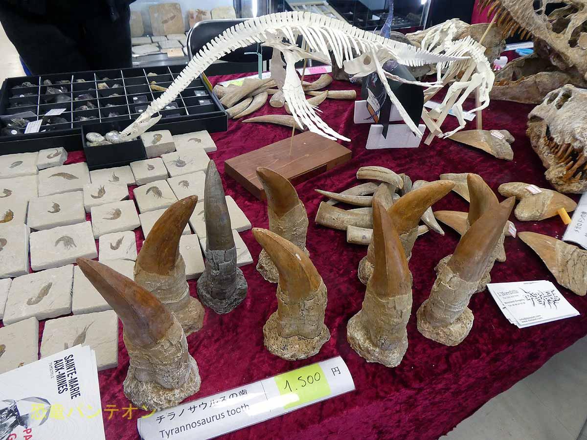 チラノサウルスの歯 レプリカ