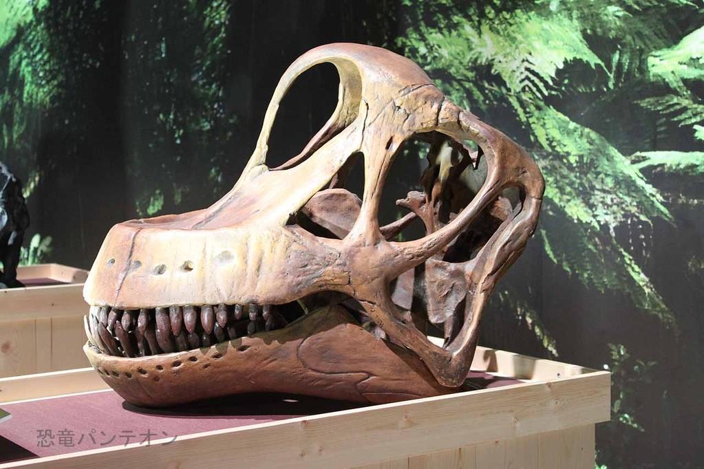 ブラキオサウルス頭骨