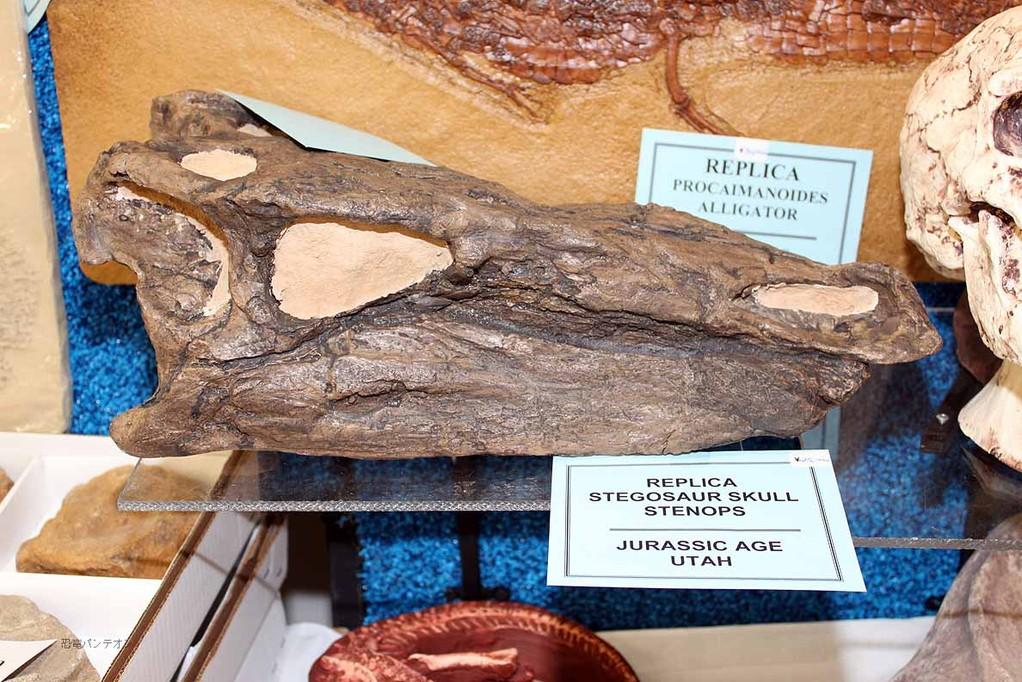 ステゴサウルス頭骨レプリカ 2万5千円。