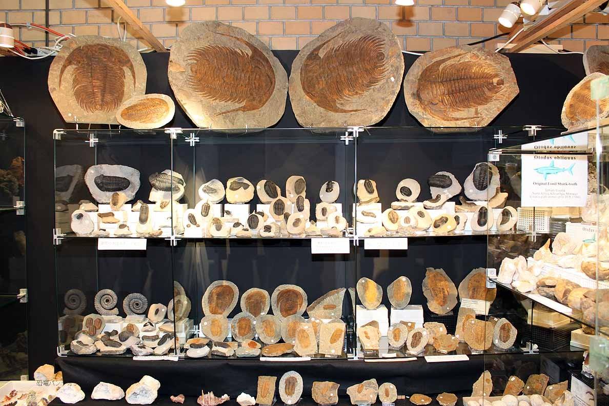 Horst Burkard Minerals-Fossils 三葉虫がいっぱいです。