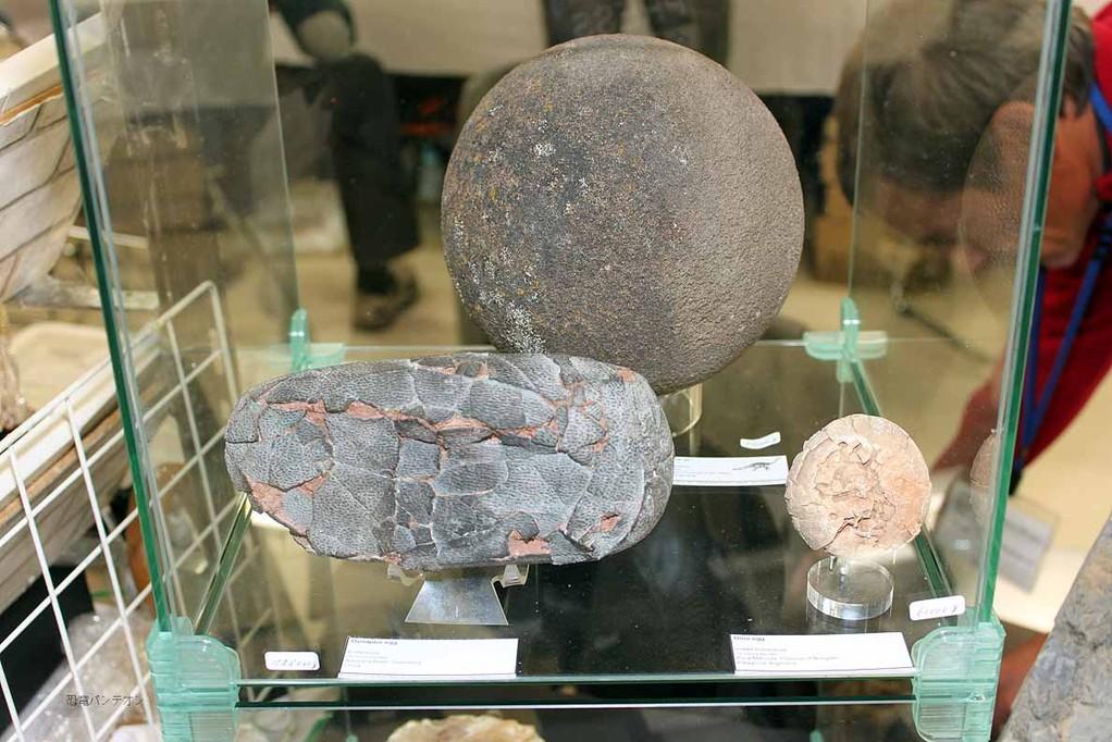 恐竜卵。左手前オヴィラプトル中国産、右と奥はアルゼンチン産。奥はサルタサウルス