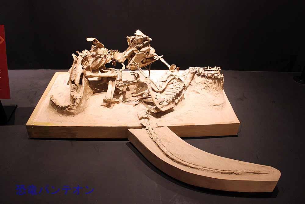 """ヴェロキラプトル(レプリカ) 全身骨格 プロトケラトプスと""""格闘中""""に化石になったのでしょうか"""